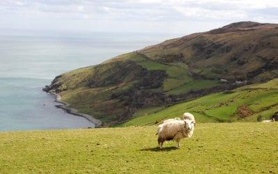Дорога вдоль северо-восточного побережья / Causeway Coastal Route. Ирландия на машине. Часть 5