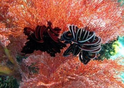 снорклинг на Бали, коралловый сад в бухте Джамелук, Амед