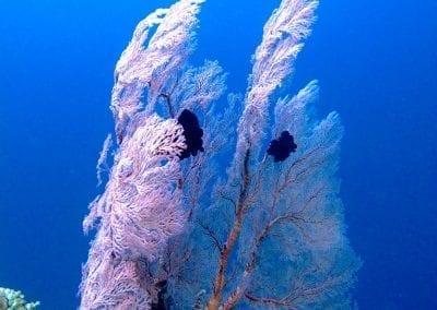 снорклинг на Бали, коралловый сад в бухте Джамелук, Амед, Бали