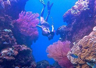 снорклинг на Бали, Амед, коралл, пляж Липа (Lipah)пляж Липа (Lipah)