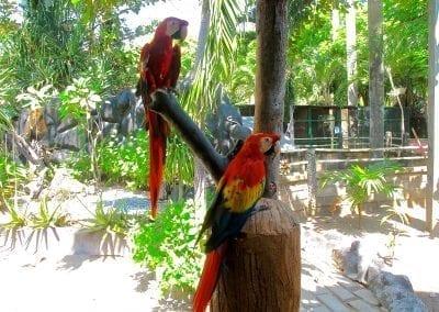 Гили-Мено, парк птиц