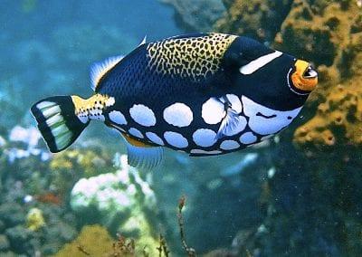 рыба-клоун, Снорклинг-круиз Комодо (Лабуан Баджо) - Ломбок