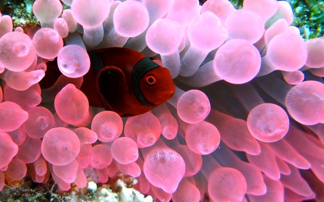 Остров Амбон, Индонезия