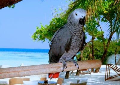 остров-резорт «Nika», Бодуфолуду (Bodufolhudhoo), Мальдивы