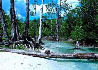 Хэвлок, Андаманские острова, дорога на пляж Elephant