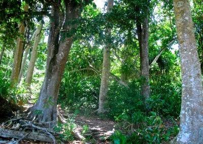 Хэвлок, Андаманские остров